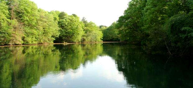 この池にこのパターンが上手くハマッたよう
