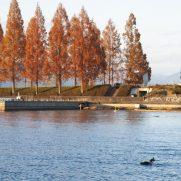 秋におすすめ鮎系ビッグベイト